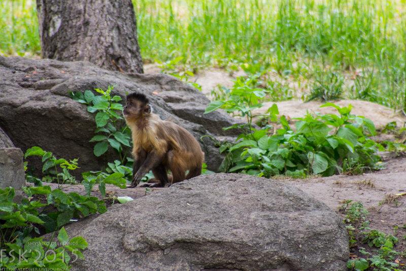 kyiv_zoo-70.jpg