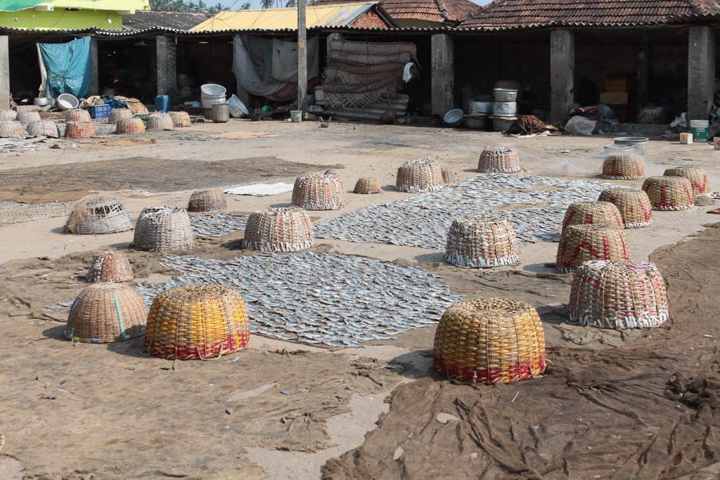 """Фотография 2. Поездка в Индию. Прогулки по Керале. Любите рыбку к пиву """"Желтый полосатик""""? Вот как ее сушат..."""