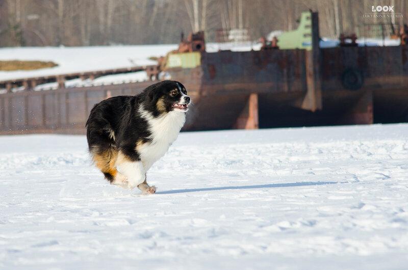 Мои собаки: Зена и Шива и их друзья весты - Страница 8 0_a8425_38d230e4_XL