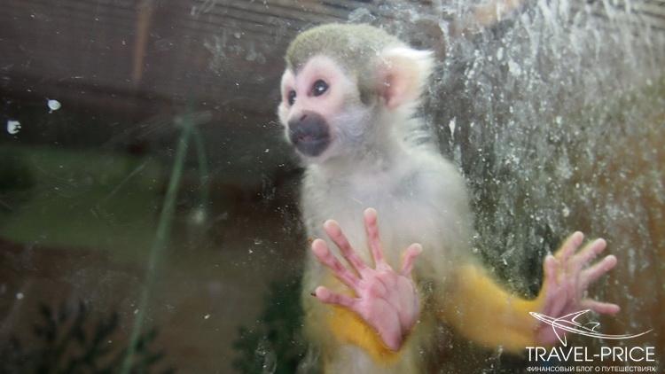 обезьяны в зоопарке Казани