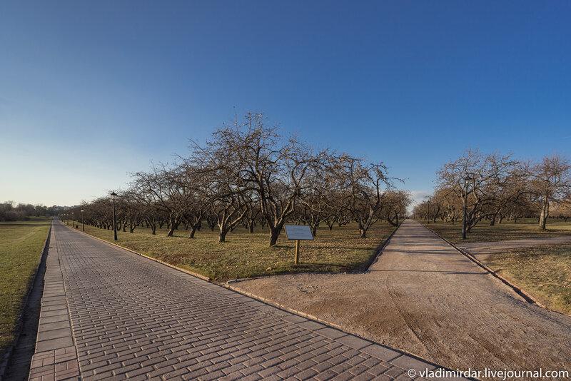 Коломенские яблоневые сады в ожидании первого снега