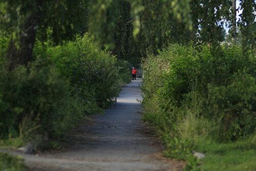Тротуар в зелени, Толстого, Куса