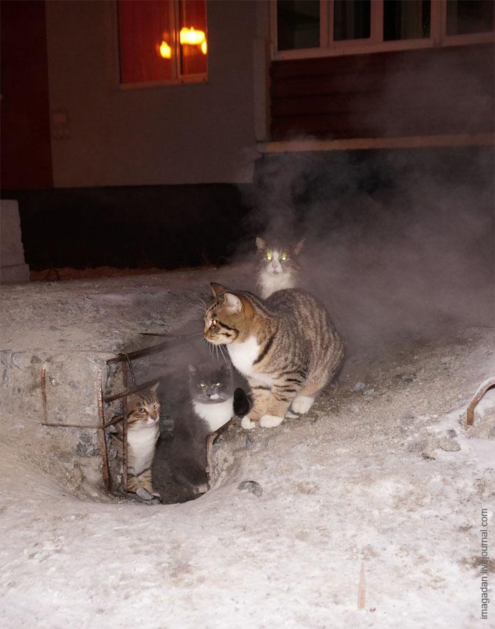 Полосатые обитатели магаданских теплотрасс