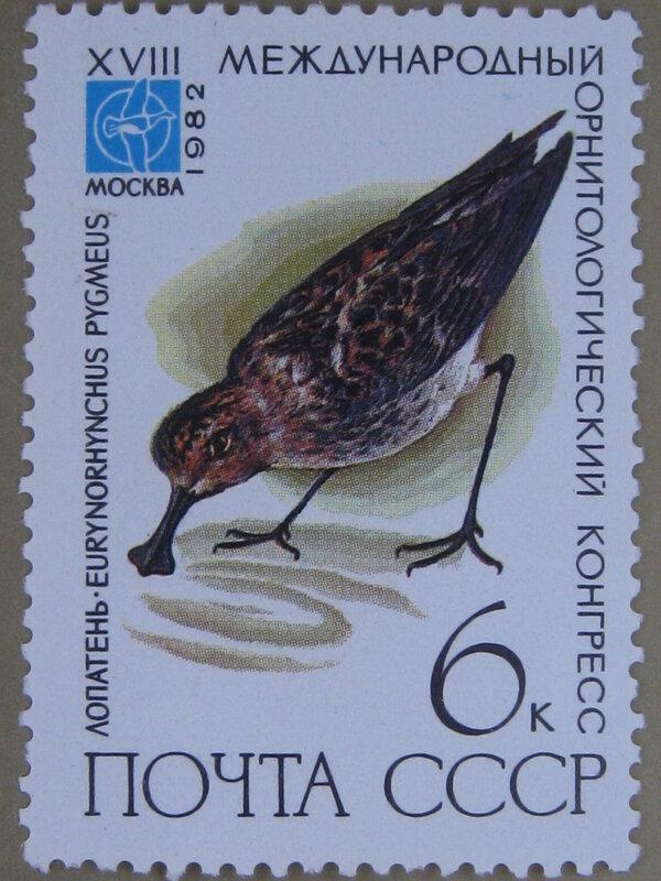 Лопатень (Eurynorhynchus pygmeus).
