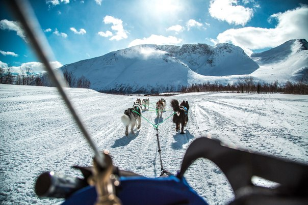 Прогулки с хаски на русском севере