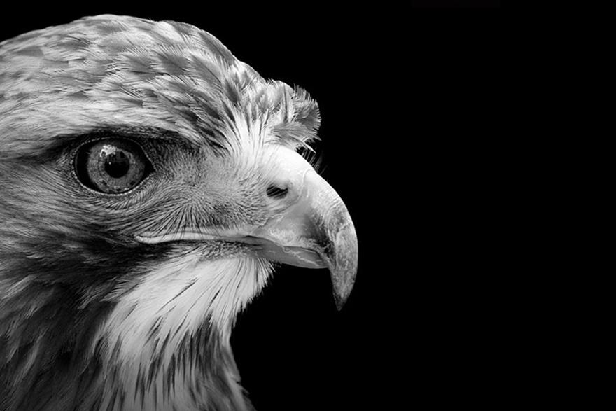 Лукас Холас. Черно белые портреты животных 0 1419c3 41fa3838 orig