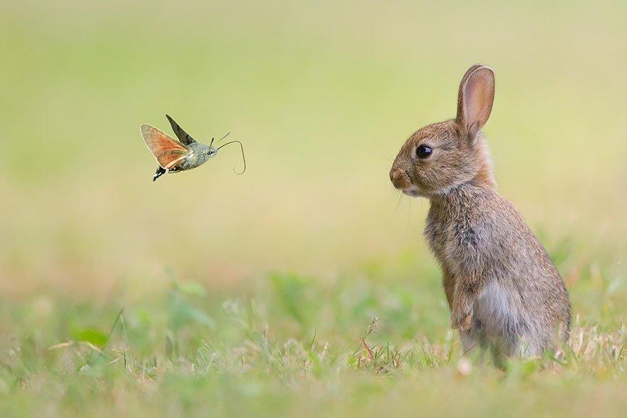 Милые животные и великолепные бабочки