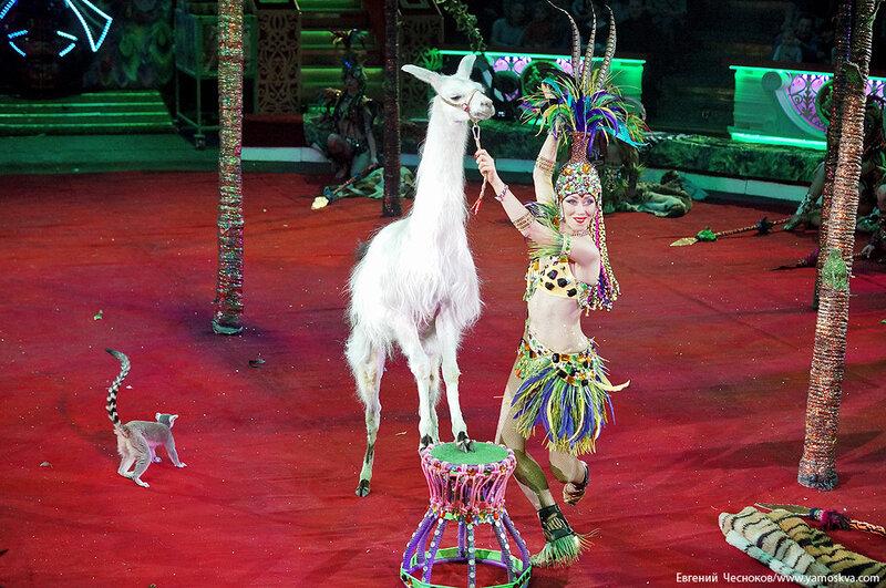 Зима. Королевский цирк. 20.02.15.79.Африка..jpg