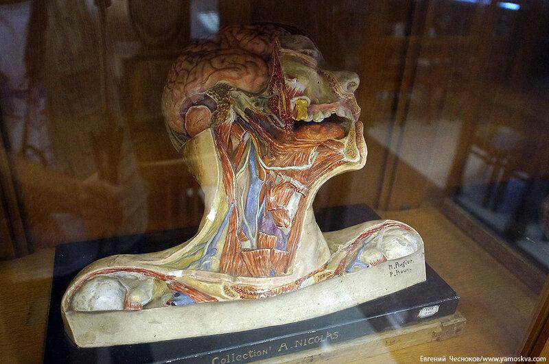 Лето. МГМУ. Музей анатомии. 27.08.15.39..jpg