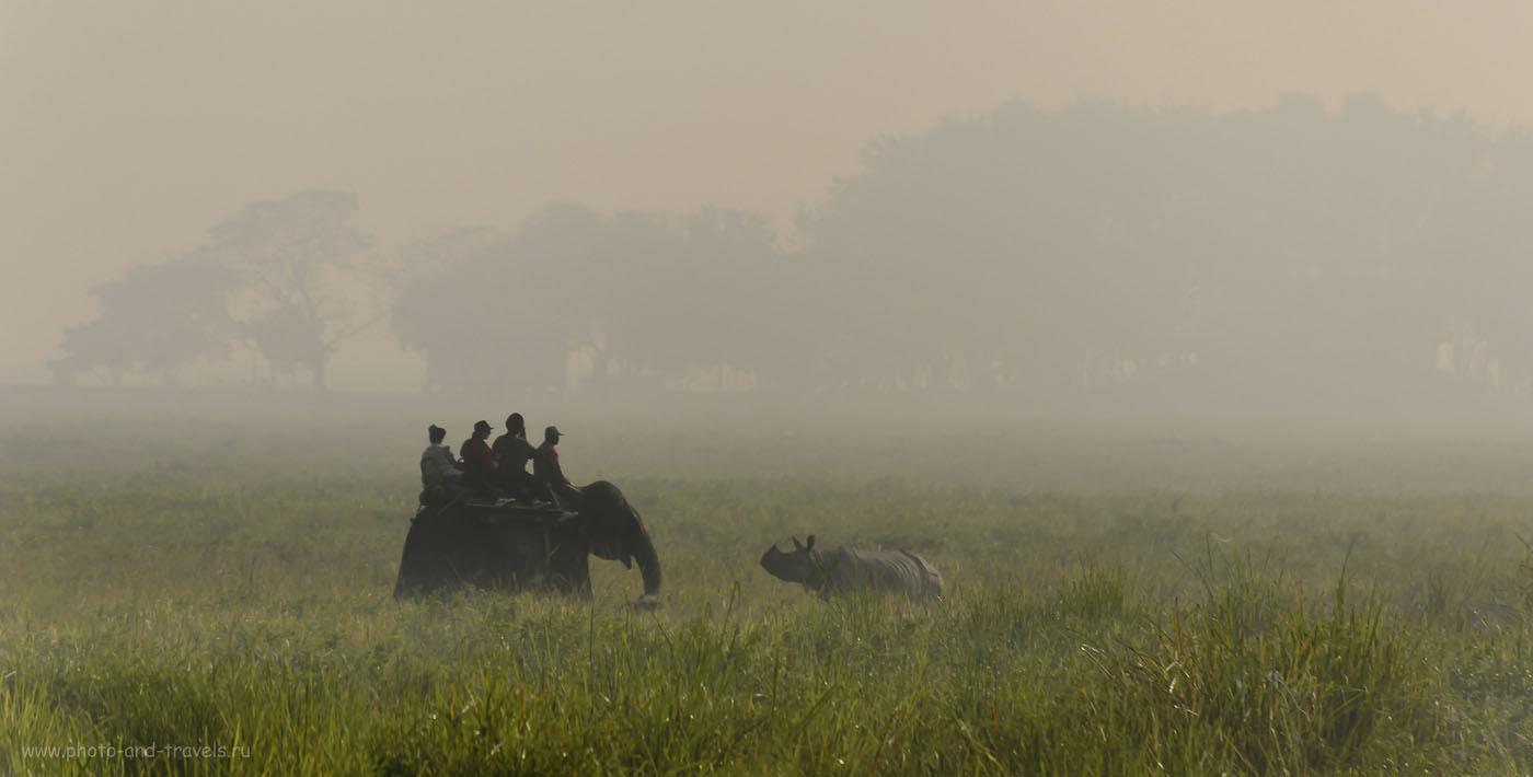 Фотография 33. Сафари на слонах в KazirangaNationalParkв индийском штате Ассам. Отзывы о самостоятельном путешествии.