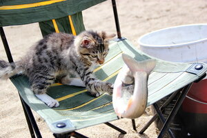 Рыбачок лохматый