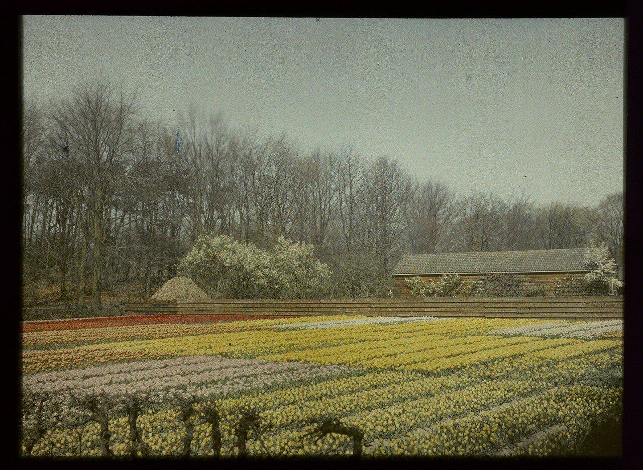 1907. Цветочное поле