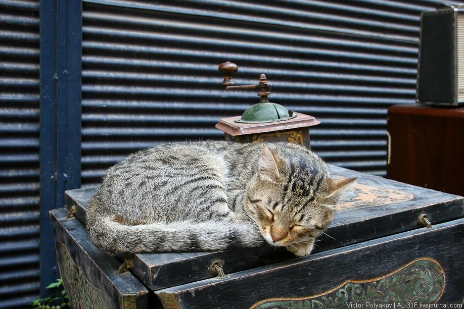 Кот. Стамбул