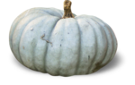 mzimm_fallintoautumn_pumpkin2_sh.png
