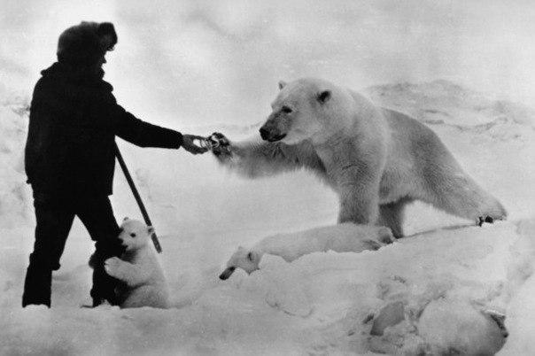 медведицу кормят сгущенкой