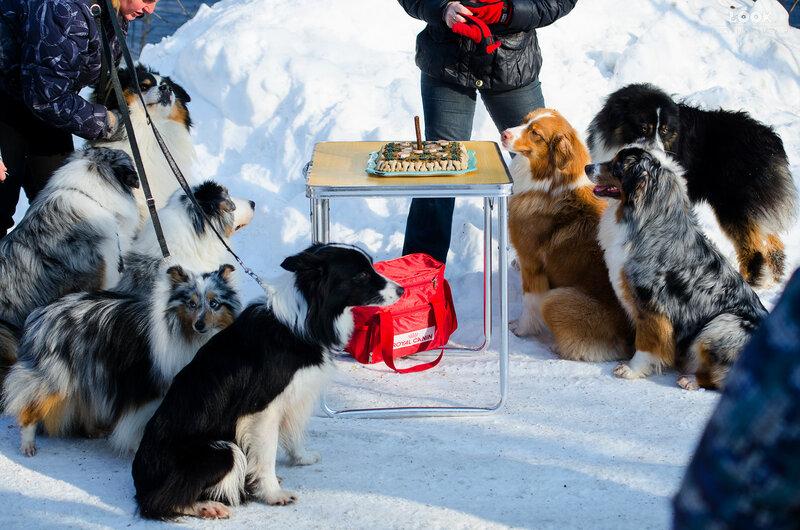 Мои собаки: Зена и Шива и их друзья весты - Страница 8 0_a8447_b2afc43_XL
