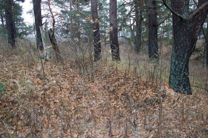 окопы на кладбище у деревни Кругликово