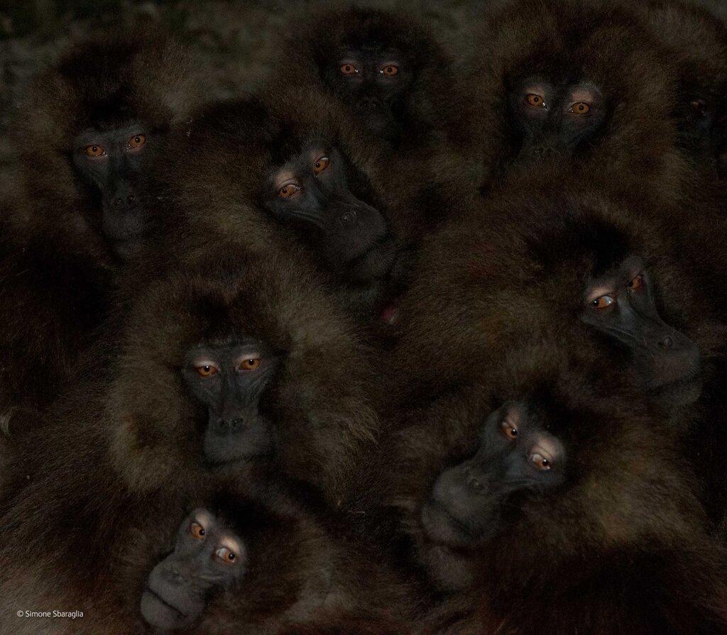 2014, Wildlife Photographers of the Year4_1280.jpg