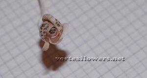 Мастер-класс. Роза  с газетным принтом «Lady Print» от Vortex  0_fc12e_3963e2bd_M