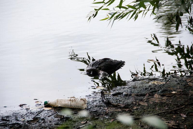 мёртвые утки в Лазури