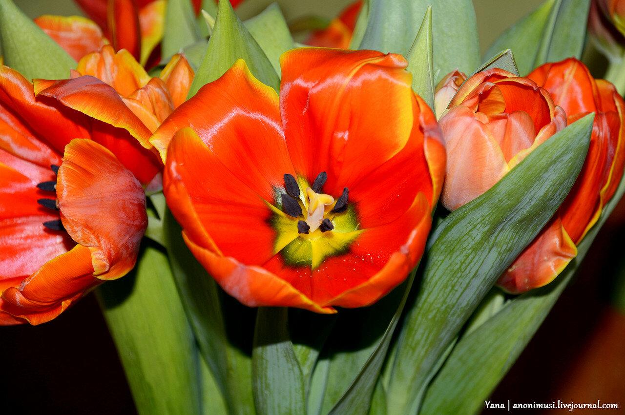 Тюльпанно-мимозное настроение