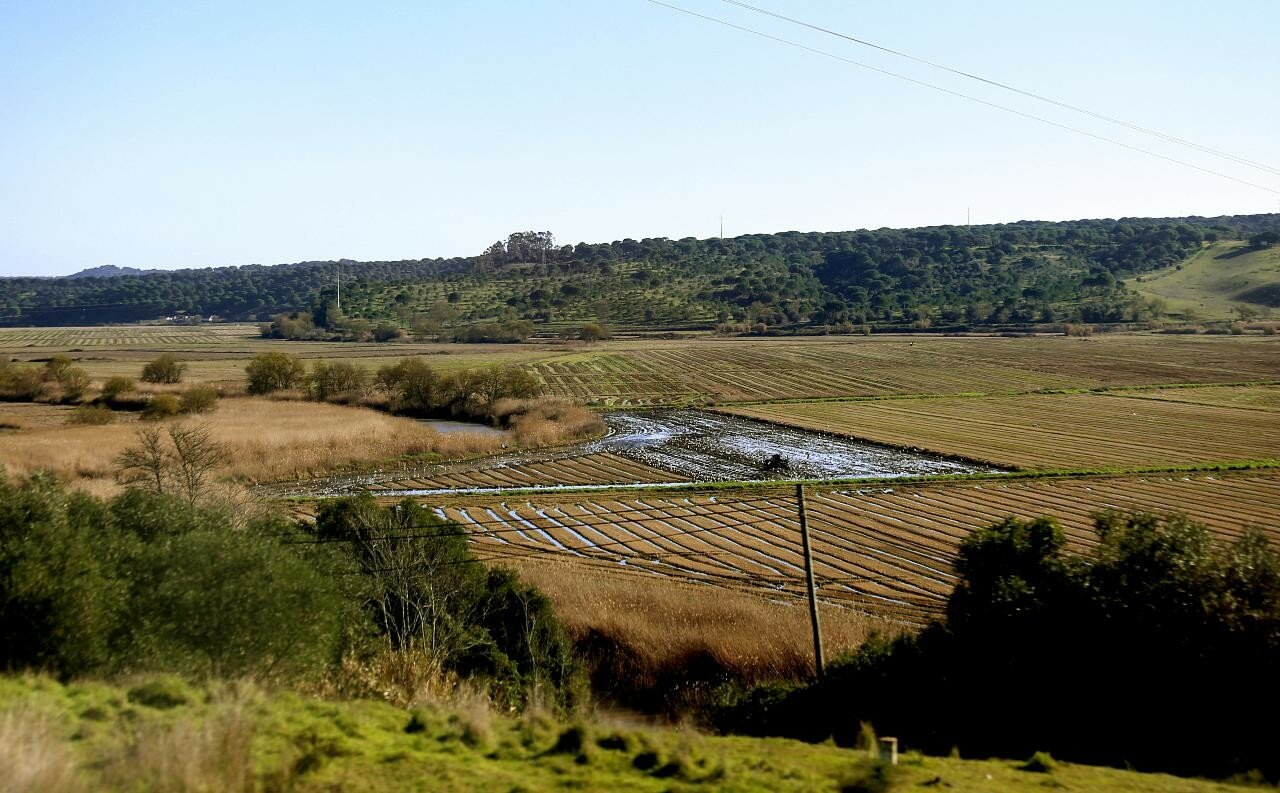 Southern Portugal in January. Landscapes
