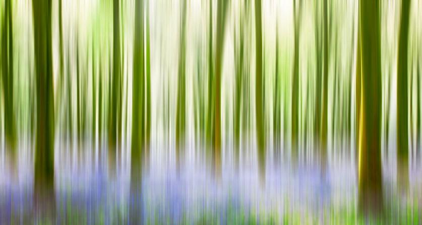 Звонкие деревья. Автор фото: Phil Bird LRPS CPAGB