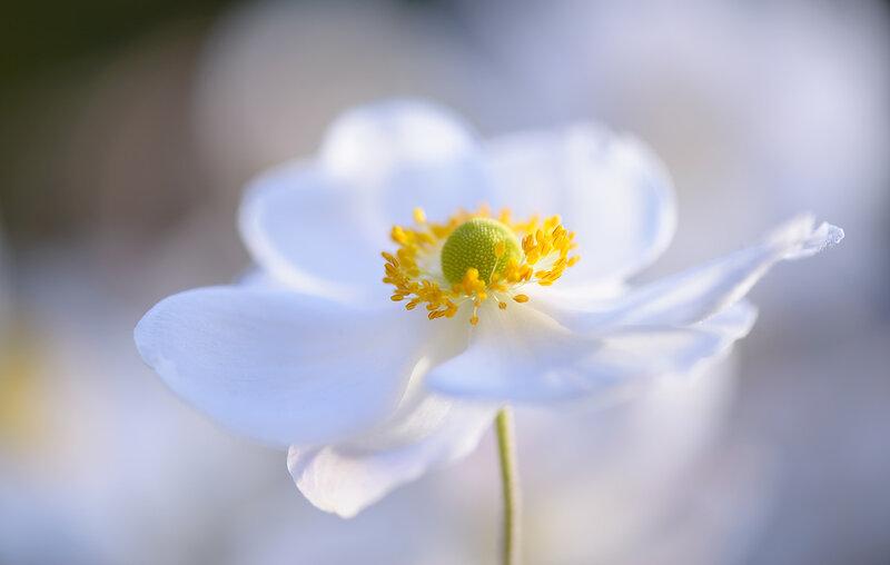 Симфония цветочной нежности