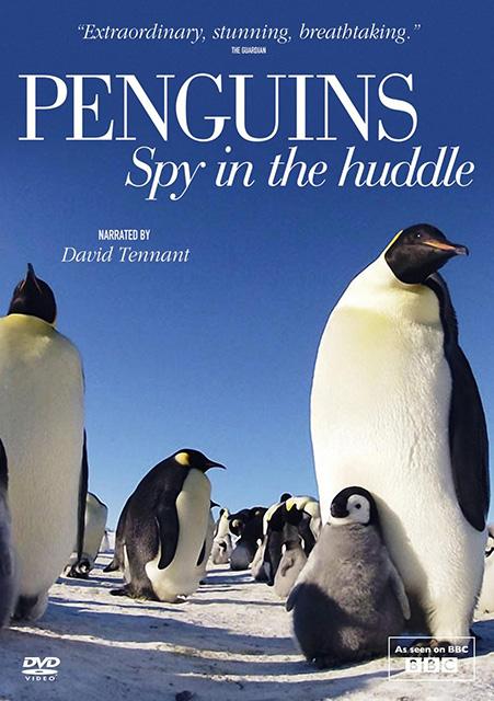 Пингвин — Шпион под прикрытием / Penguins — Spy In The Huddle (2013) HDTVRip 720p