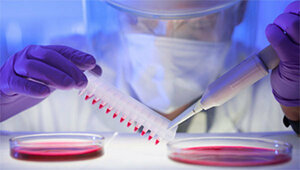 Ученые вскоре откроют вакцину против Эболы