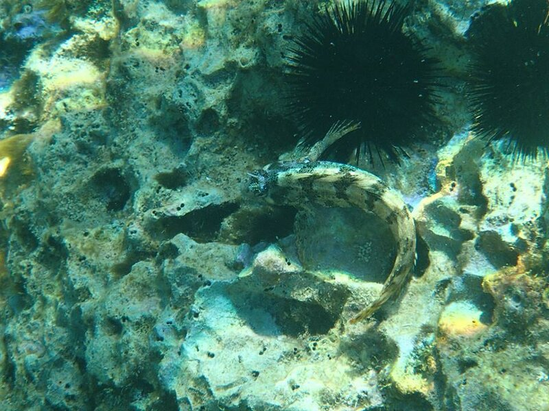 Подводный мир Адриатики 2.jpg
