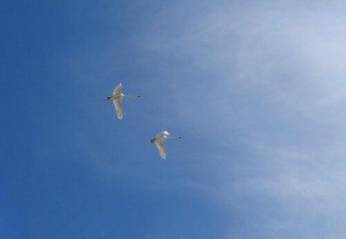 Летят