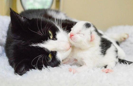 как принимать роды у кошки дома