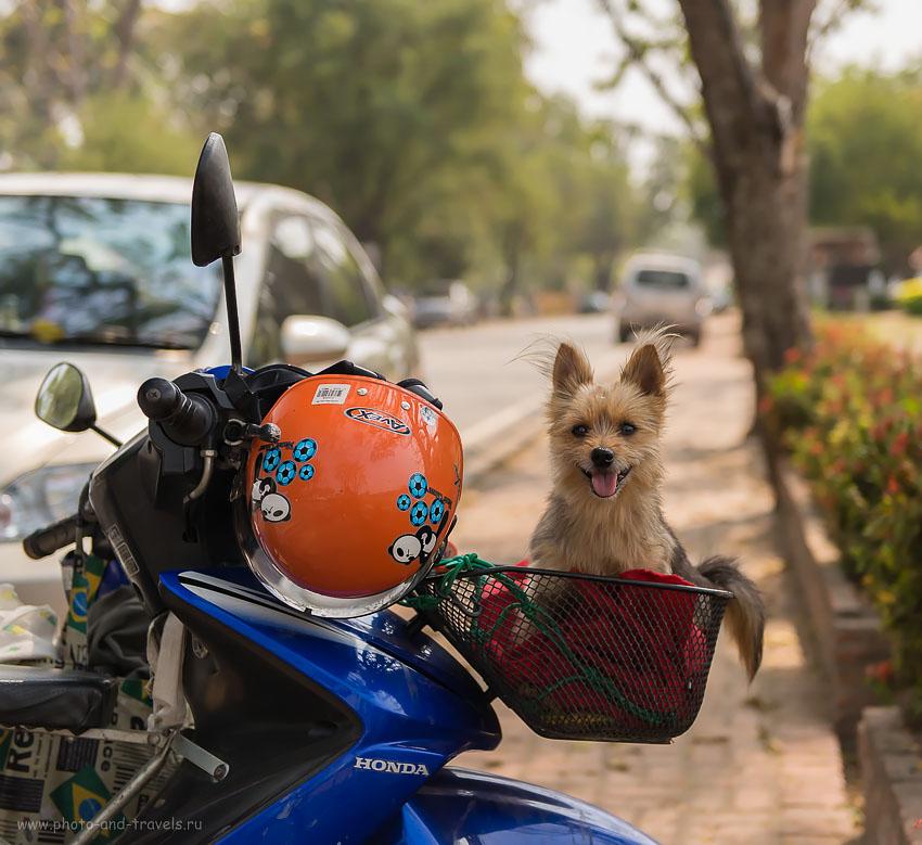 Фото 15. Друг Человека. Отзывы о самостоятельном отдыхе в Таиланде. Что посмотреть.
