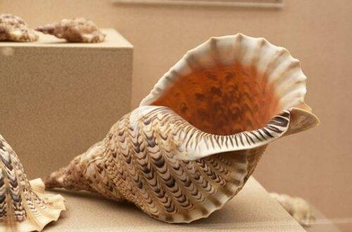 музей морских раковин.jpg