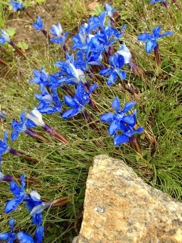 А вот еще синие цветочки...