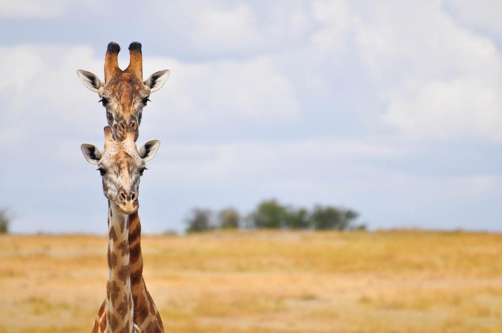 13. Да пошли вы! (Фото Gil Gofer | Comedy Wildlife Photography Awards):