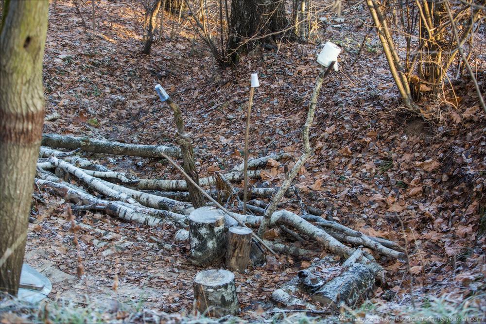 лес иней котики