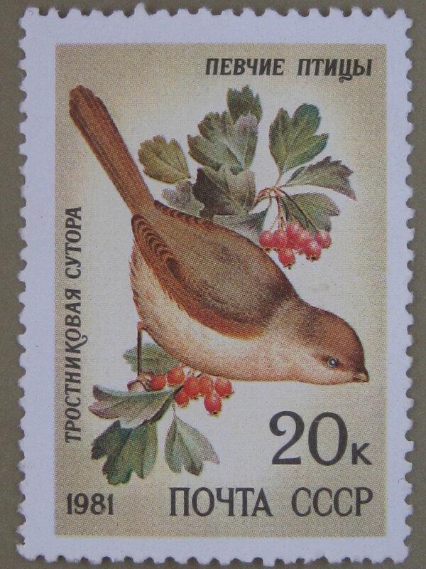 Тростниковая сутора (Paradoxornis heudei).