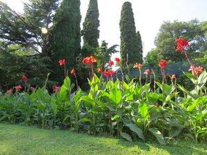Крым, Мисхорский парк, цветы
