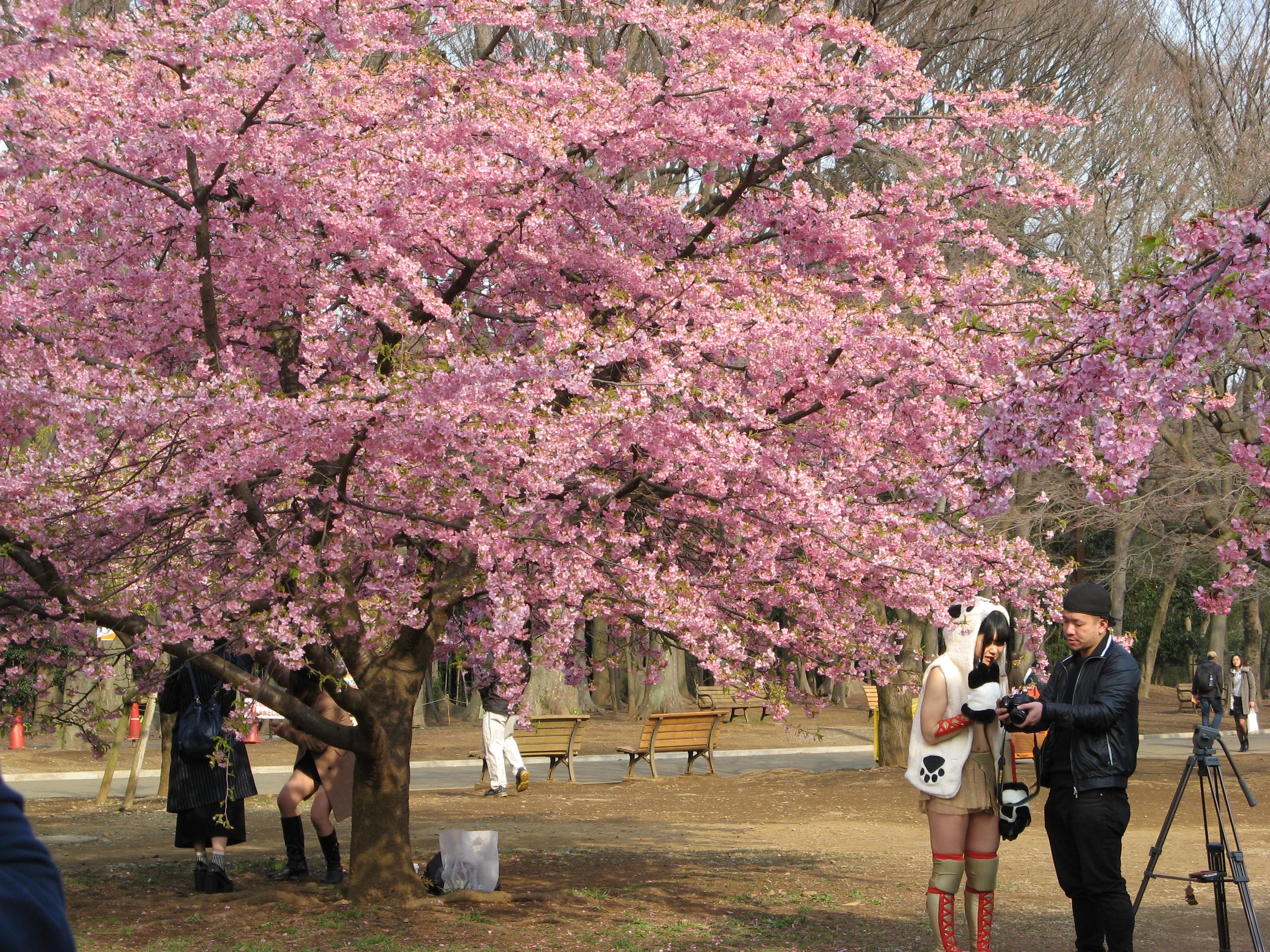Умэ-мацури в парке Йойоги. Токио