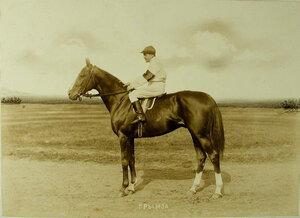 Жокей с рыжей кобылой 3-х летГрымзой(завод А.А.Бобринского)-победительницей скачек на  приз государыни императрицы.