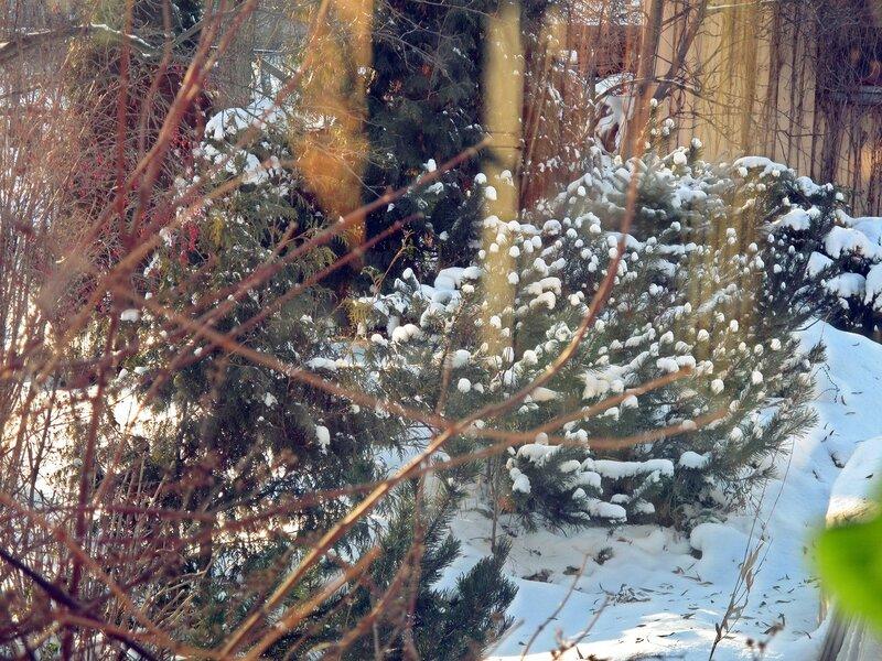 Зимний садик