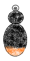 Bombus lapidarius female