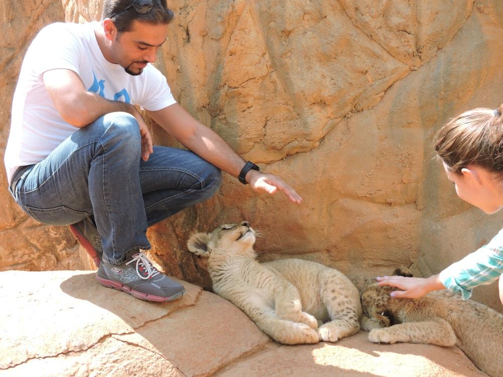 lions31.jpg