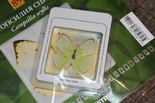 Бабочки №89 - Катопсилия сцилла (Catopsilia scylla)