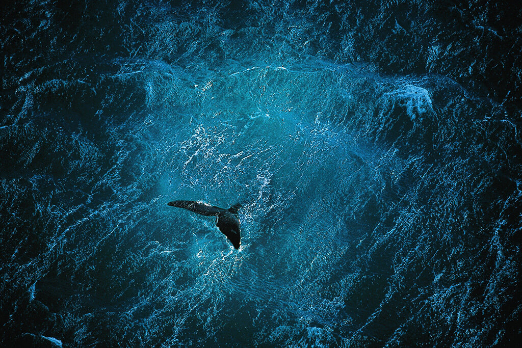 02.05.2012.poster_Planet-Ocean_A1+A2_en