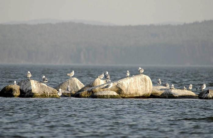 Иткуль. Пейзаж с чайками (19.12.2014)