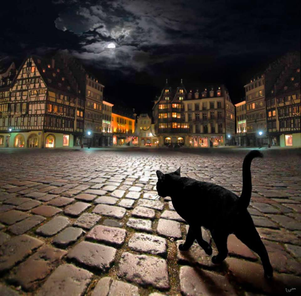 Бродячая кошка в Страсбурге , Игорь Зенин.jpg
