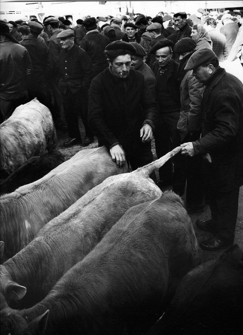 1966. Рынок телят в Ланжеаке